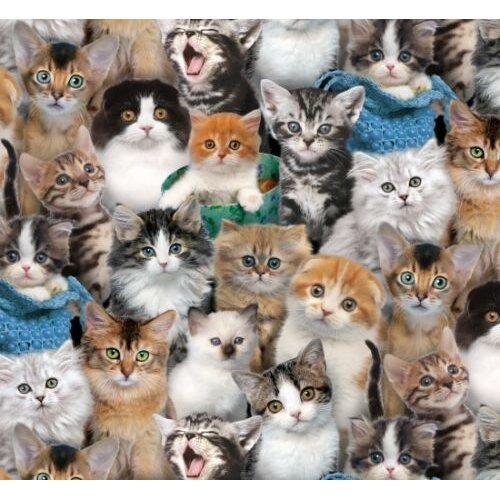 Fat Quarter Cat Breeds Cats Cotton Quilting Sewing Patchwork Fabric