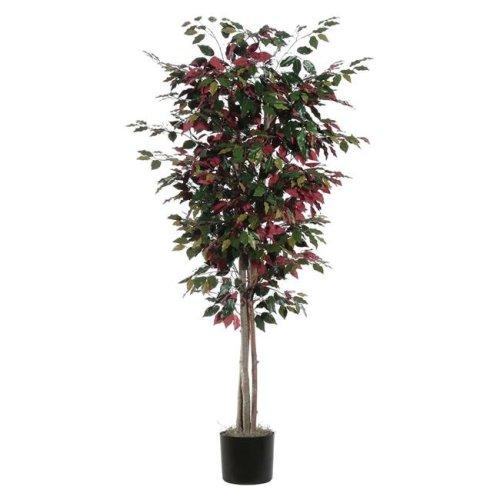 Capensia Deluxe Everyday Tree - 6 ft.