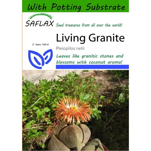 Saflax  - Living Granite - Pleiopilos Nelii - 40 Seeds - with Potting Substrate for Better Cultivation