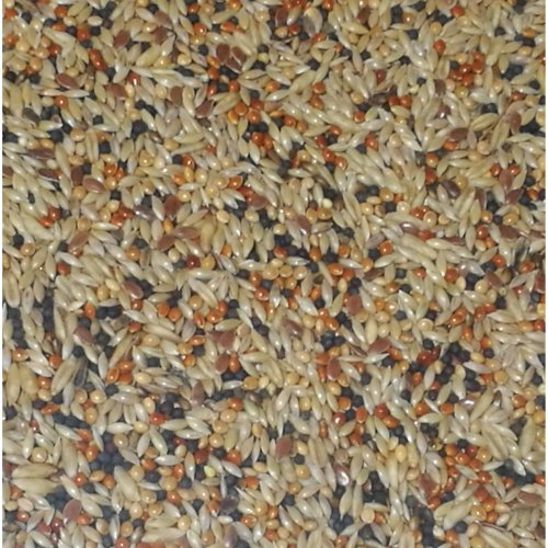 Wildlife Kingdom Classic Premium Mix Canary Seed Bird Food Finches Feed Birds (1kg Canary Mix)