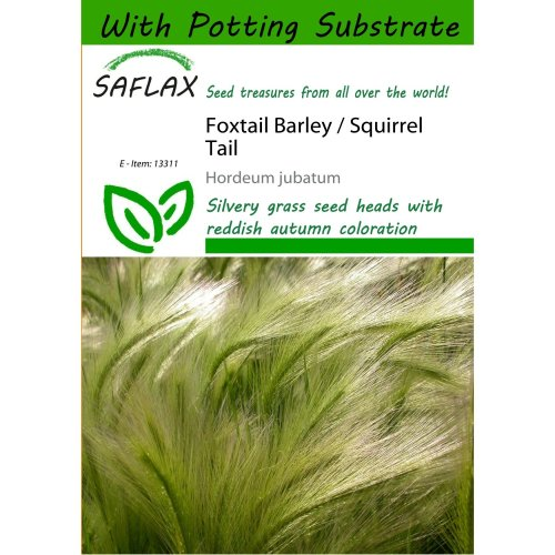 Saflax  - Foxtail Barley / Squirrel Tail - Hordeum Jubatum - 70 Seeds - with Potting Substrate for Better Cultivation