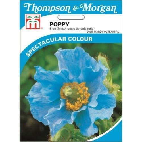 Thompson & Morgan - Flowers - Poppy Blue (Meconopsis) - 50 Seed