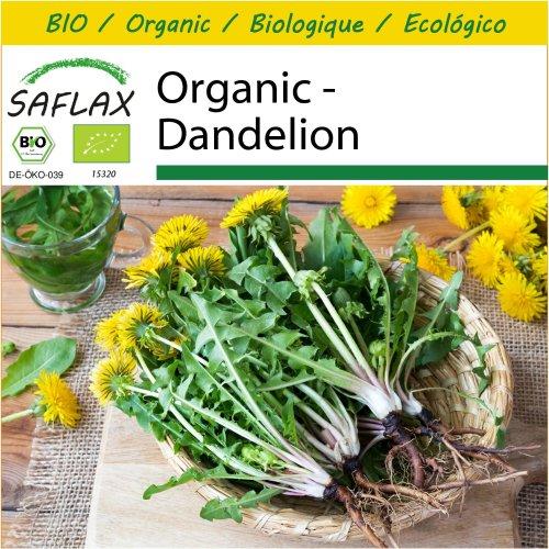 SAFLAX Potting Set - Organic - Dandelion - 400 certified organic seeds  - Taraxacum