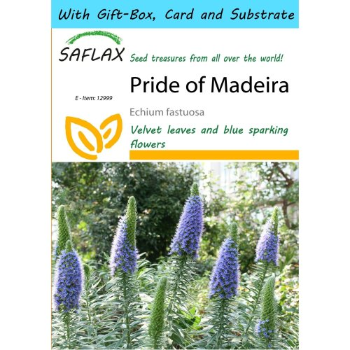 Saflax Gift Set - Pride of Madeira - Echium Fastuosa - 100 Seeds - with Gift Box, Card, Label and Potting Substrate