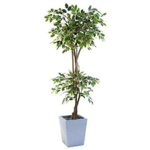 Artificial Ficus Umbrella Double Ball Tree
