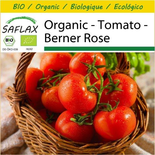 SAFLAX Potting Set - Organic - Tomato - Berner Rose - 10 certified organic seeds  - Solanum