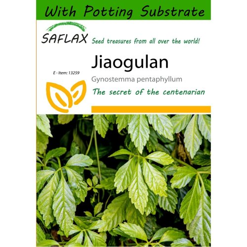 Saflax  - Jiaogulan - Gynostemma Pentaphyllum - 30 Seeds - with Potting Substrate for Better Cultivation