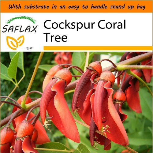 SAFLAX Garden in the Bag - Cockspur Coral Tree - Erythrina - 6 seeds
