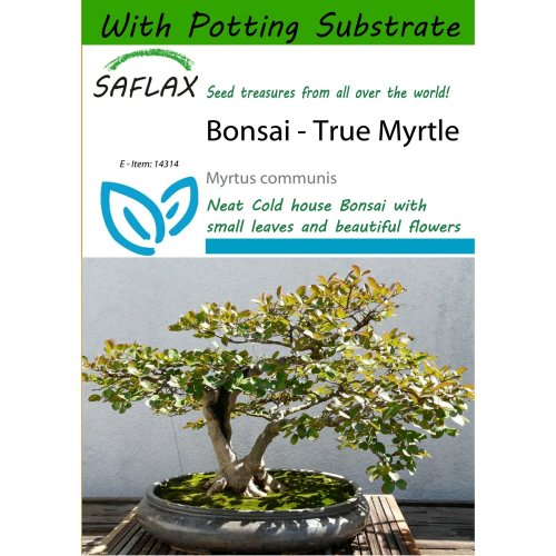 Saflax  - Bonsai - True Myrtle - Myrtus Communis - 30 Seeds - with Potting Substrate for Better Cultivation