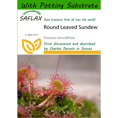 Saflax  - Round Leaved Sundew - Drosera Rotundifolia - 50 Seeds - with Potting Substrate for Better Cultivation
