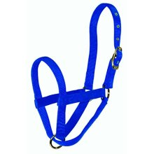 Hamilton Calf Turn Out Halter, Blue