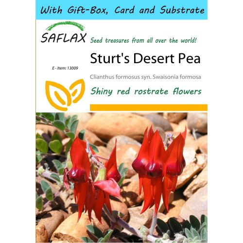Saflax Gift Set - Sturt's Desert Pea - Clianthus Formosus Syn. Swaisonia Formosa - 20 Seeds - with Gift Box, Card, Label and Potting Substrate
