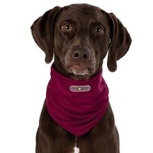 Insect Shield® Dog Loop - Invisible, Odourless Insect Protection (xl - Neck 58 -  dog insect shield loop sizes