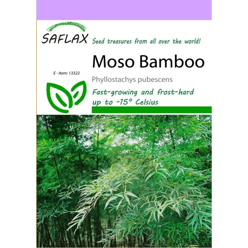 Saflax  - Moso Bamboo - Phyllostachys Pubescens - 20 Seeds