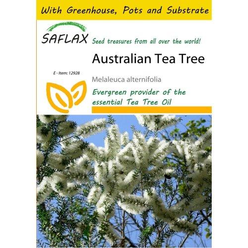 Saflax Potting Set - Australian Tea Tree - Melaleuca Alternifolia - 400 Seeds - with Mini Greenhouse, Potting Substrate and 2 Pots
